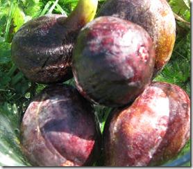 figs 009