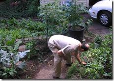 parkwood garden 005